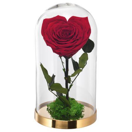 trandafir criogenat cadou